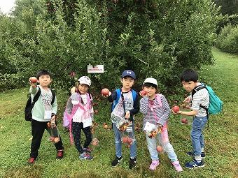 初等部1年生~3年生がアップルピッキングへ行きました。